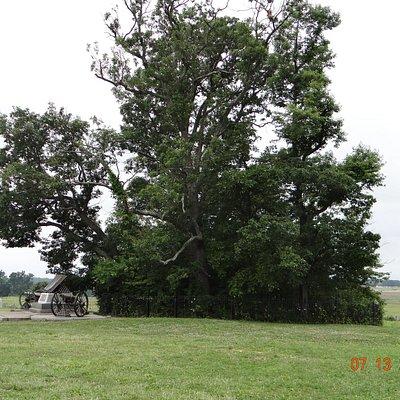 Copse of Trees