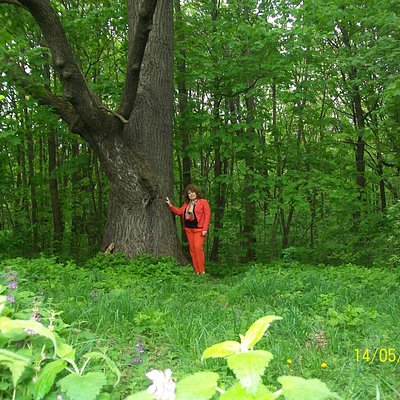 У дуба- мудреца в Ельниковской роще