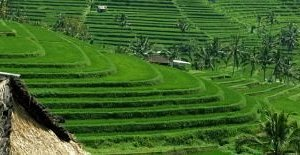 UNESCO harritage as the largest rice terraces
