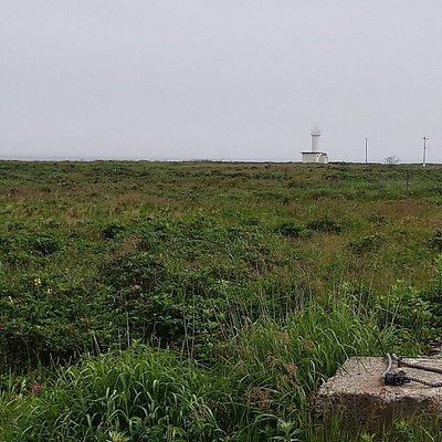湿地帯のなかにあるように見える灯台