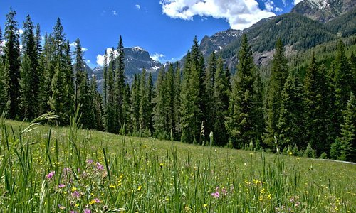 Meadows along the trail leading to Grotto Falls