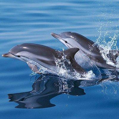 Dolphins Tour Barcelona