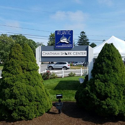 photos of the Chatham Shark Center
