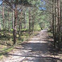 Ścieżka rowerowa przez Półwysep Helski