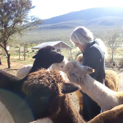 Being educated about alpaca's