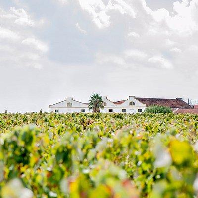 Filipe Palhoca Vinhos Quinta da Invejosa Winery