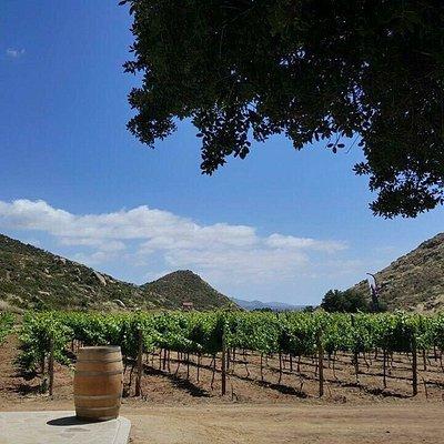 Excelente escenario, grandes vinos!