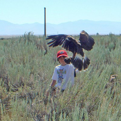 8 year old Cooper handling Larry the Lanner Falcon.