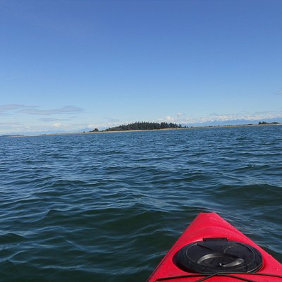 Kayaking to Tree Island from Union Bay