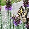 Butterflydays