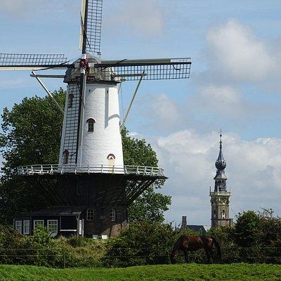 Molen De Koe met torentje Stadhuis Veere op achtergrond