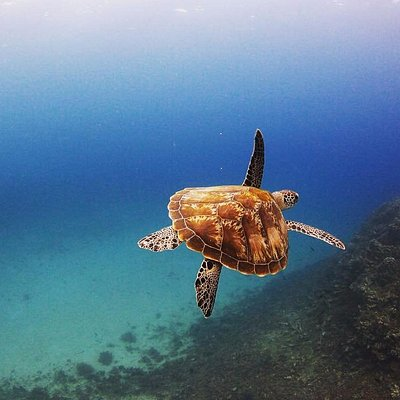 Swiming with Turtles.