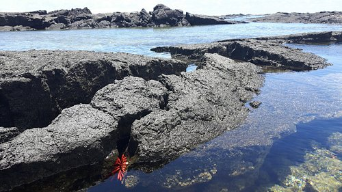 Kapoho Tide Pools - easy access and tranquility