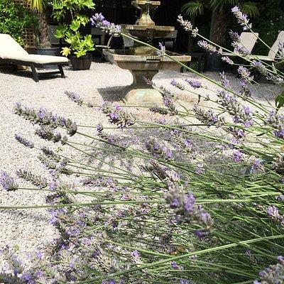 Our exclusive garden