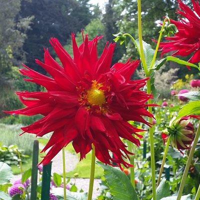 Csodás növények
