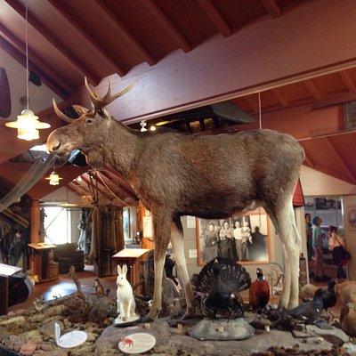 Dies sind Fotos aus dem Jagd- und Fischereimuseum in Eckerö