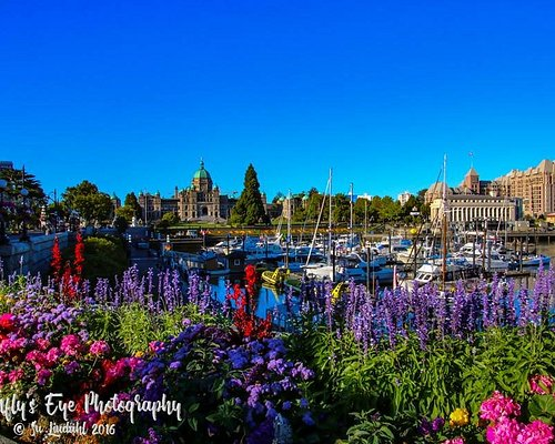 Early morning on the Inner Harbour.