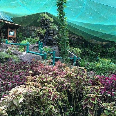 Butterfly Sanctuary at Mambukal Resort