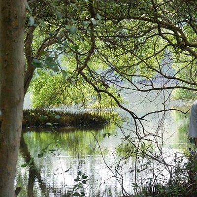 seorang pengunjung sedang menikmati suasana hutan bakau yang rimbun
