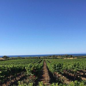 Ecco il nostro bellissimo vigneto. Here our beautiful vineyard.