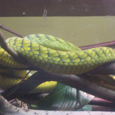 Uno dei serpenti nelle teche