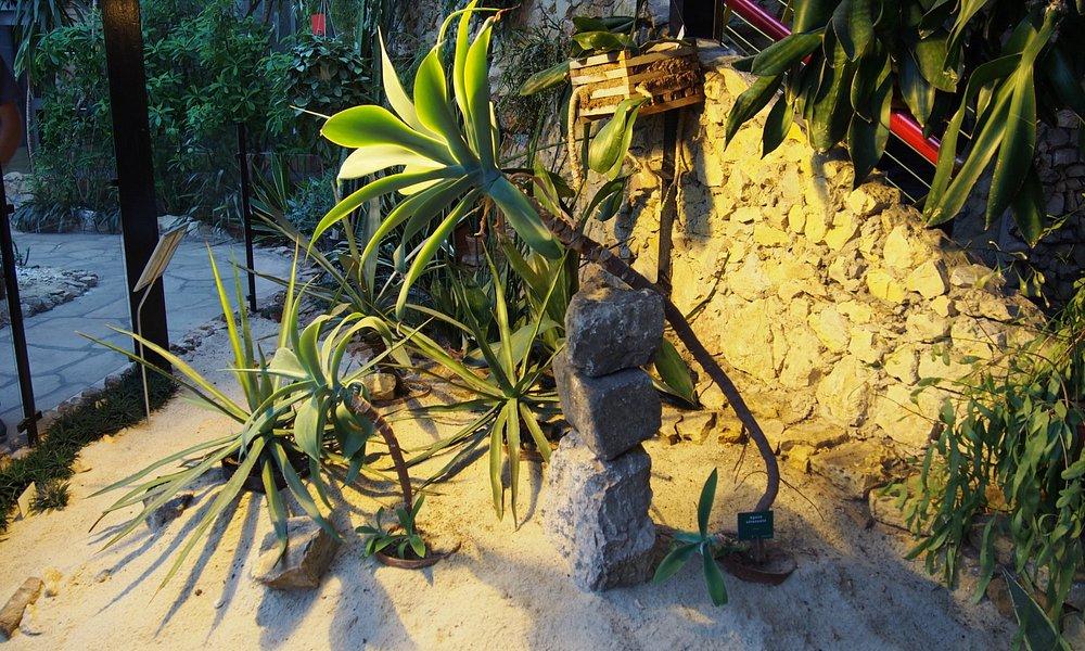 kaktusy