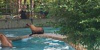 Parco Zoo Punta VerdeParco Zoo Punta Verde