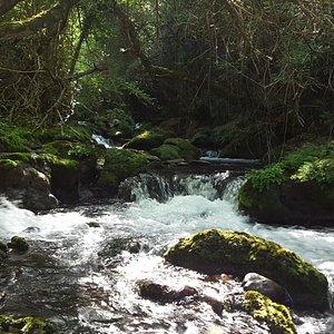 tramo inicial del río Cadagua