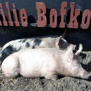 familie Bofkont