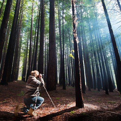 Photography in the Great Forest