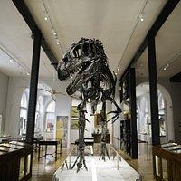 Allosaurus - Photo by Lee Allen