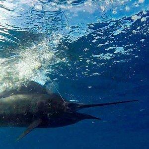 Tamarindo's top fishing tour