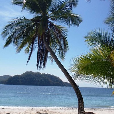 White sand, clear water and palm trees - can you ask for more?