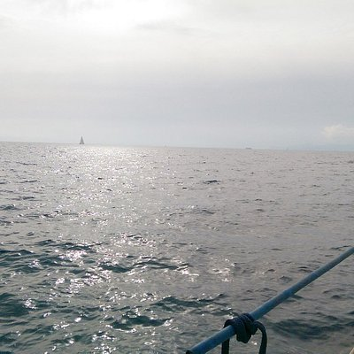 Tasty Sailing