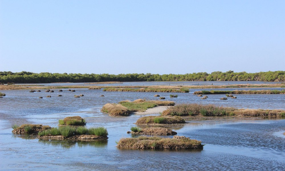Die seichte Sumpflandschaft von Le Teich mit vielen kleinen Inseln
