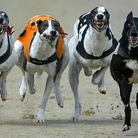Racing Thursday and Saturday 7.30pm
