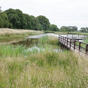 Pond and boardwalk near the visitor centre