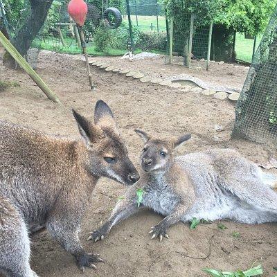 Núcleo Zoológico El Bosque