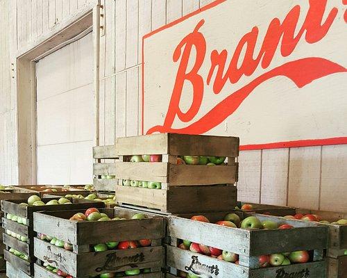 Brant's Apple Orchard