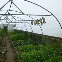 inside a polytunnel