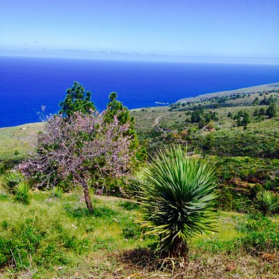 Wonderful nature at Ruta de los Dragos.