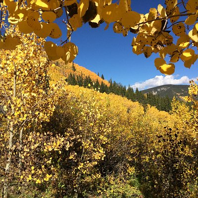 Aspens are everywhere and spectacular in September on this hike