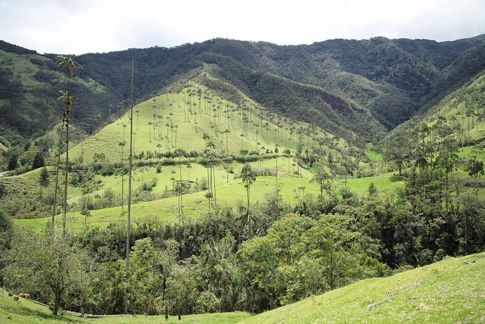 Corcoran valley, bamboo forest, coffee and cacao