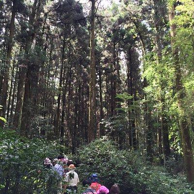 不同的樹種,一樣好美,炎熱的季節,走入步道後,頓覺涼意,很棒!