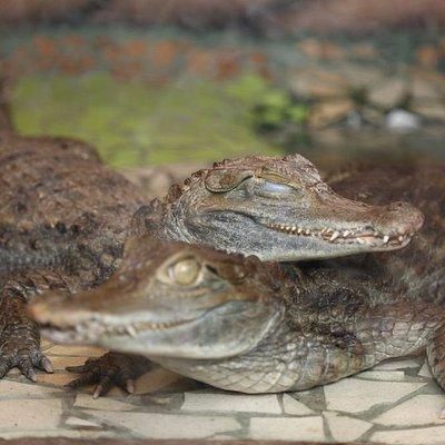 Маленькие крокодильчики