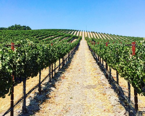 Beautiful Vineyards ready for Harvest