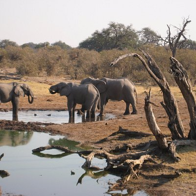 elephant of chobe