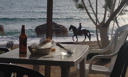 Στη παραλία της Μαραθιάς μπορεί αν δεις και άλογα από τον Ιππικό Όμιλο που βρίσκεται εκεί