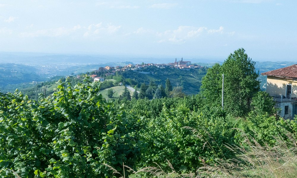 DEscending to Alba from the Alta Langhe