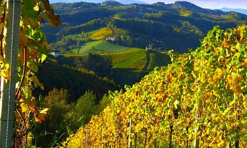Weinberge im Herbstlicht